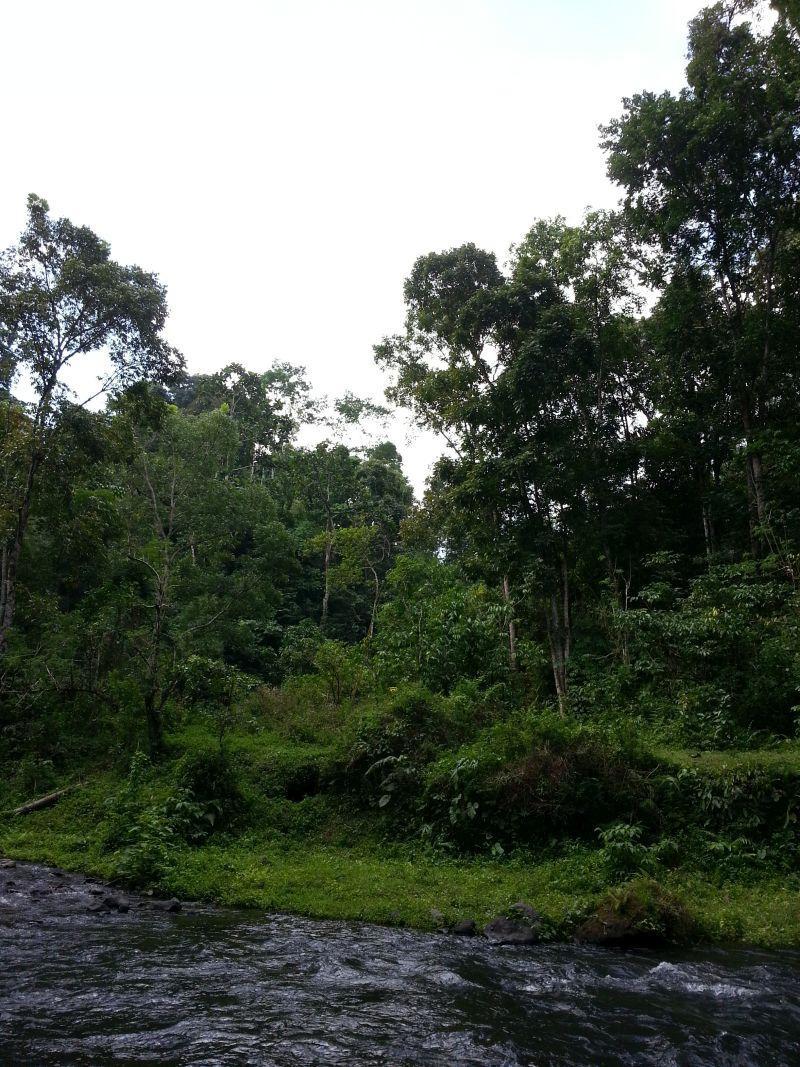 Дикие джунгли