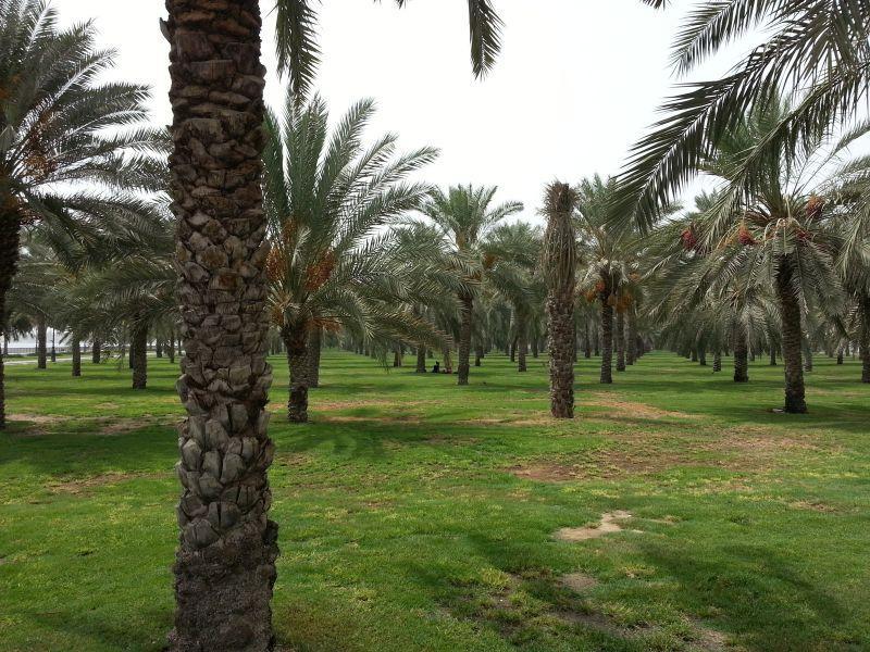 ОАЭ, Объединенные Арабские Эмираты
