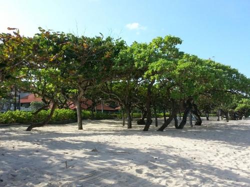 Посадка деревьев около отелей